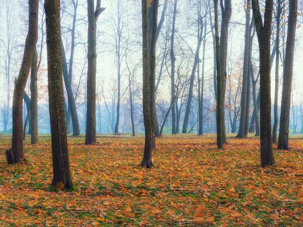 Утренний туманный лес. красивый осенний туманный пейзаж с деревьями в лесу. мягкий фокус.