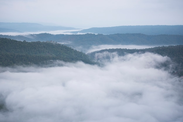 朝の霧の霧深い山の森の風景