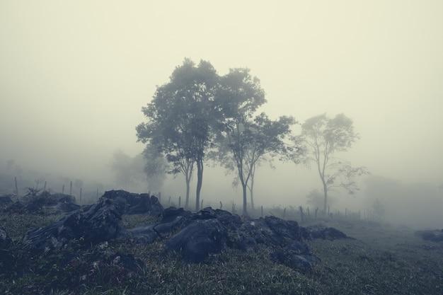 メキシコ、ワステカポトシナ、アキスモンの黒い岩でいっぱいの霧深い山の谷