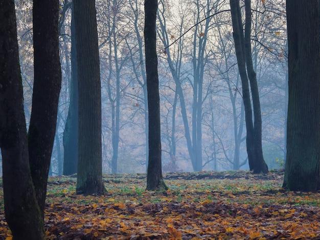 霧の神秘的な森。森の中の木々と美しい秋の霧の風景
