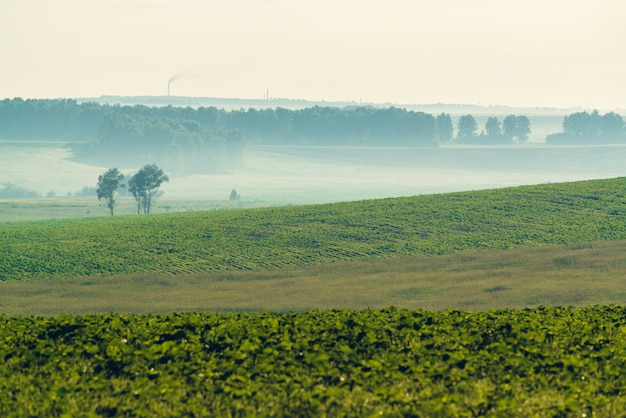 Misty plowed field in springtime with copy space.