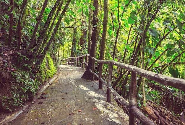 中央アメリカ、コスタリカの霧深い熱帯雨林