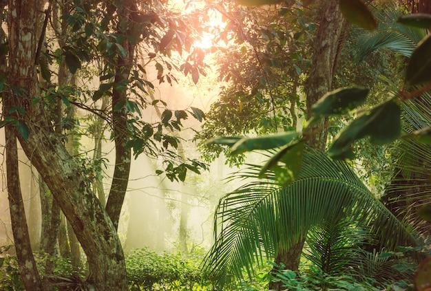중앙 아메리카 코스타리카의 안개가 자욱한 열대 우림
