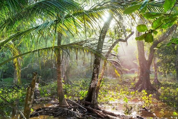Туманный тропический лес в коста-рике, центральная америка
