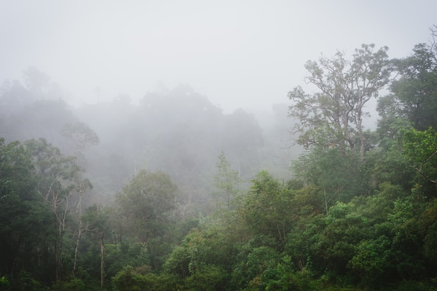 Misty rainforest with steam and moisture.