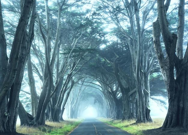 霧深い天候の霧深い木々の路地。