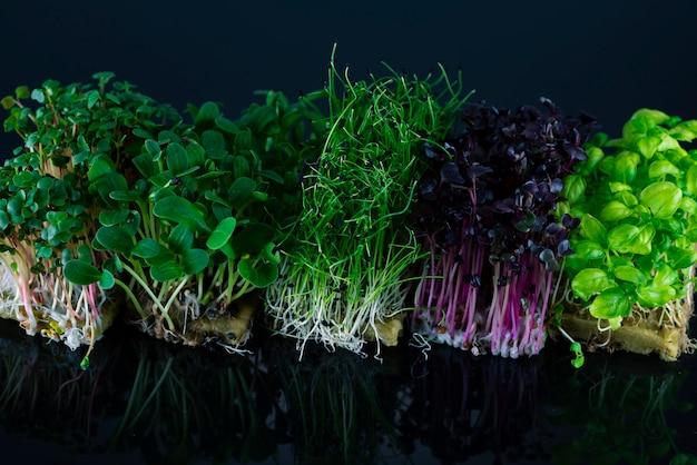 Смесь микрозелени на черном фоне с отражением. микро зелень лука, редиса, подсолнуха и базилика. концепция здорового питания.