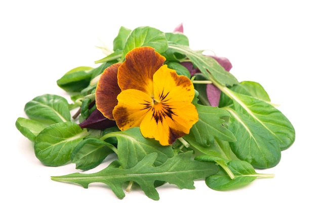サラダとルッコラほうれん草のサラダ赤と白地に食用花を混ぜる