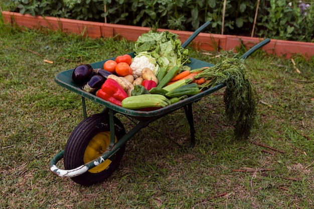 Mix of vegetables in wheelbarrow