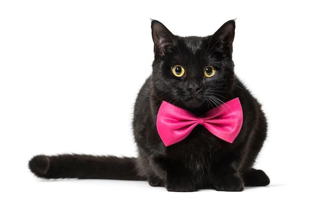 ピンクの蝶ネクタイの混合品種の猫