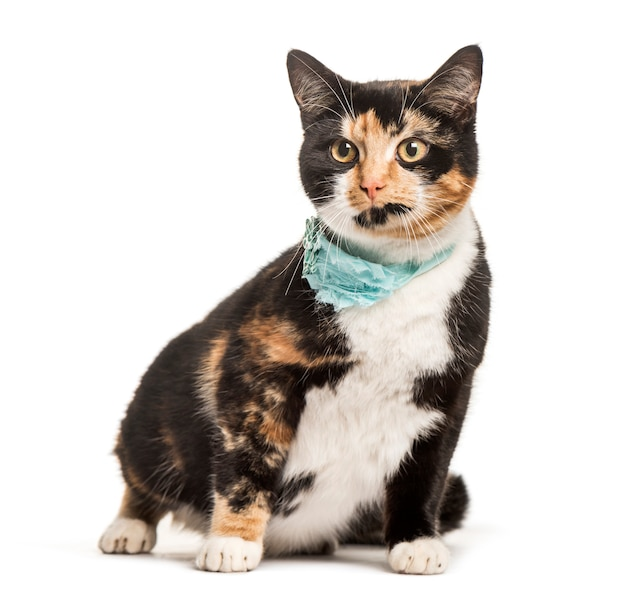 Mixed- breed cat sitting against white background