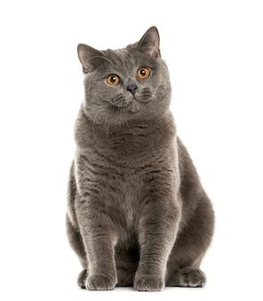 Mixed-breed cat
