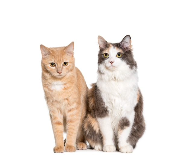 Mixed-breed cats sitting