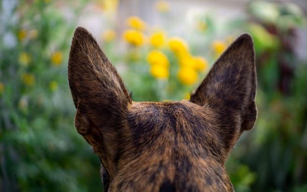 Смешанная порода овчарка в саду