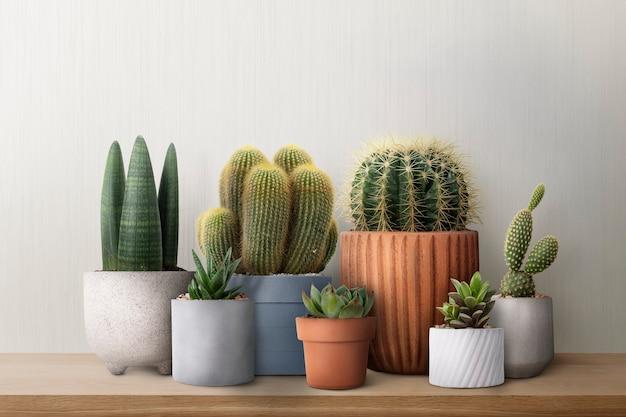 Mixed cacti on a shelf