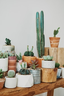 Mixed cacti and succulents in small pots