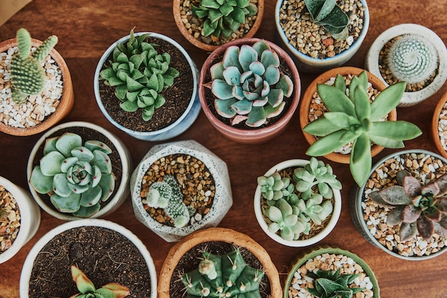 Mixed cacti and succulents in tiny pots