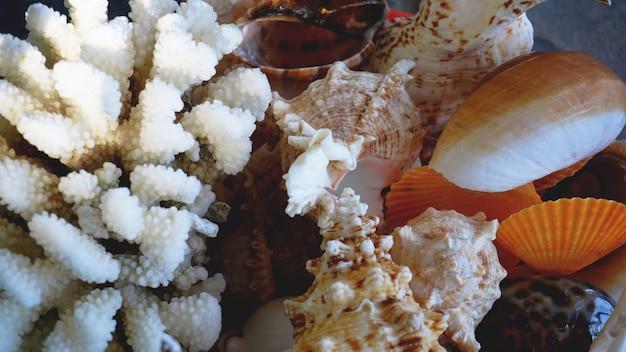 배경으로 혼합된 다채로운 바다 조개입니다. 바다 포탄 매크로 보기입니다. 조개를 닫습니다.