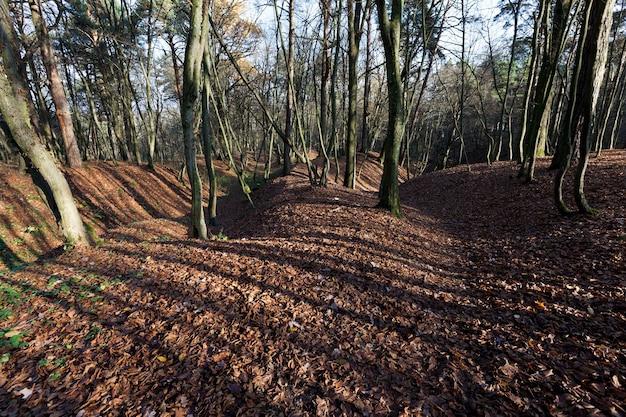 裸木と落葉樹の混合林