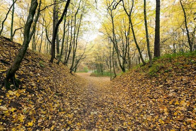 秋の紅葉と落葉樹の混交