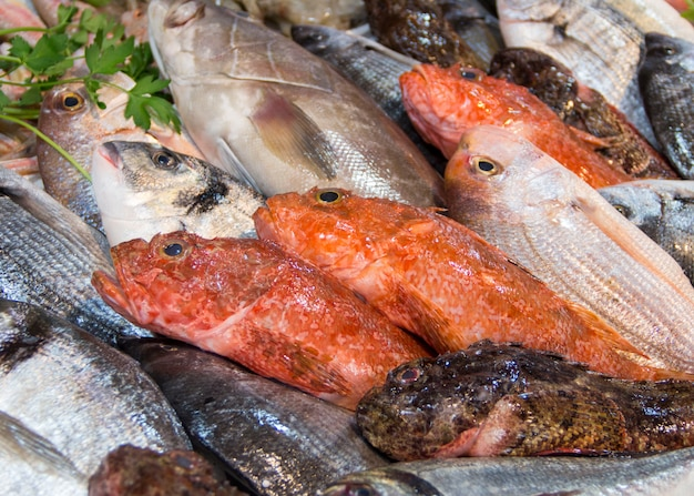 Mixed fish for sale on a local fish market close up