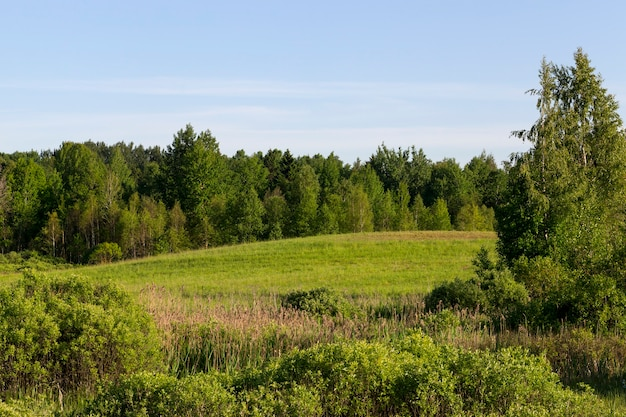 자란 녹색 잔디 구릉 지형, 여름 풍경에서 자라는 혼합 숲과 나무