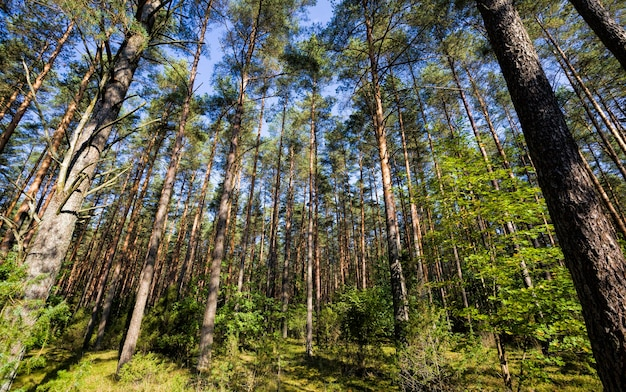 Mixed forest, the autumn season of september.
