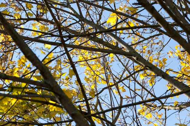 Смешанный лес бабьим летом