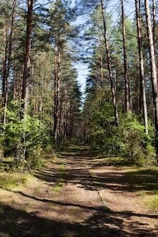 Смешанный лес в осенний сезон во время листопада, листва меняет цвет на деревьях и начинает опадать, красивая природа, пейзаж и дорога для машин