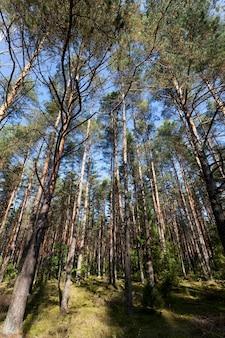 Смешанный лес в осенний сезон во время листопада