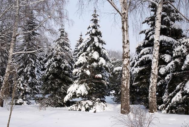 冬の雪の混交林