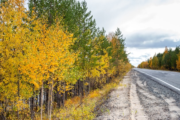 Смешанный лес с березками, с желтыми листьями и зелеными соснами вдоль дороги осенью