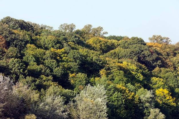 Смешанный лес с лиственными и хвойными деревьями, осенний пейзаж. изменение цвета листвы с зеленого на желтый