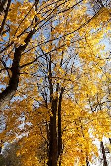 가을 단풍 동안 노란색과 다른 색의 단풍이 섞인 숲, 아름다운 풍경