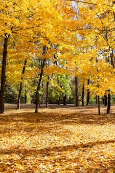 紅葉の間に黄色と異なる色の葉を持つ混合林