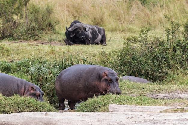 Смешанная группа животных возле небольшого пруда в саванне африки