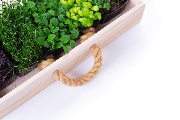Смешанная зелень в лотках для выращивания в белом деревянном ящике. микрозелень из лука, базилика и редиса, мы выращиваем микрозелень.