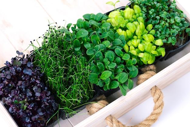 흰색 나무 상자에 성장 트레이에 혼합 마이크로 채소