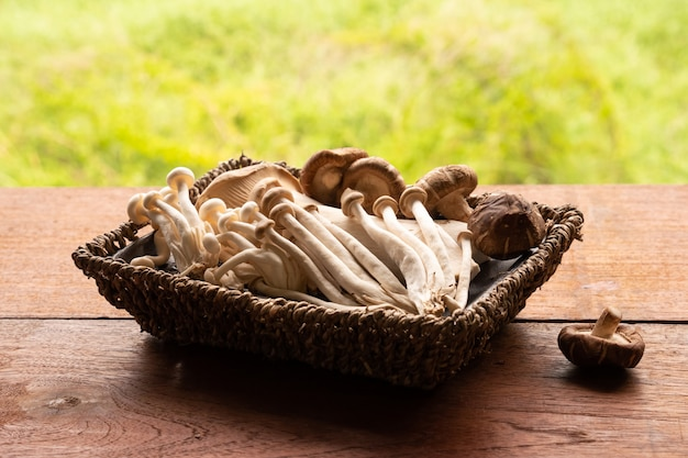 Mixed organic mushrooms in basket on wooden table with nature background