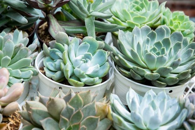 혼합 succulents 또는 선인장 배경입니다. 판매 될 냄비에 작은 선인장.