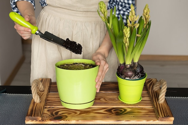 Mixing soil for planting indoor plants, the girl is engaged in gardening in the apartment
