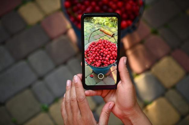 ライブビューの携帯電話。青い金属製のバケツでサクランボの収穫を撮影している女性の手でスマートフォンのクローズアップ。垂直方向の画像