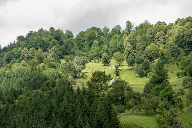 ルーマニア、mocanita蒸気機関車、bucovinaのvaser渓谷の風景