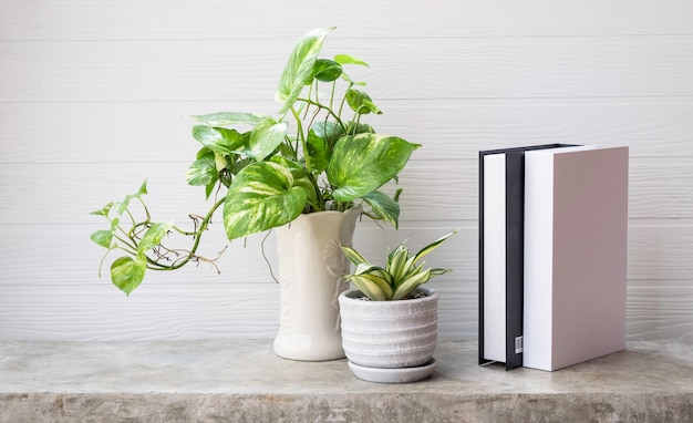 Mock up black and white book snake plant and house plant spotted betel or australian native monstera  in white vase