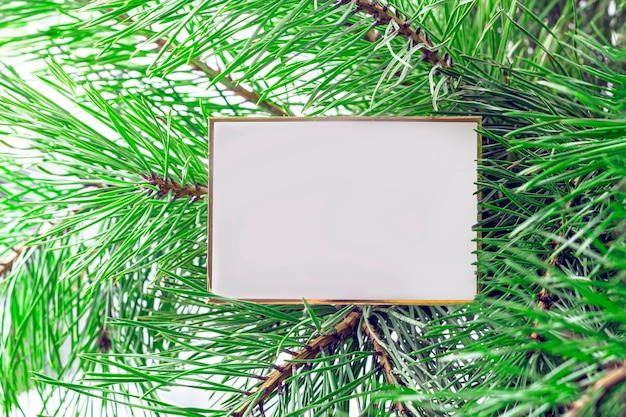 Mock up of christmas gift or note card fir tree branch
