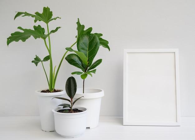 화이트 룸 인테리어의 흰색 나무 테이블에 현대적인 세련된 용기에 사진 프레임과 집 식물을 모의하고, philodendron selloum, 고무 식물, ficus lyrata로 자연 공기 정화
