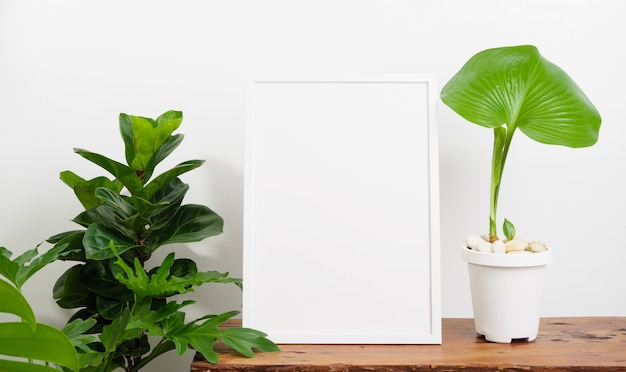 Mock up poster wooden frame  and botanical proiphys amboinensis,fiddle fig plant in white pot