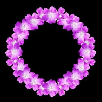 검은 배경에 고립 된 야생 제라늄의 꽃에서 꽃 프레임 라운드 모의