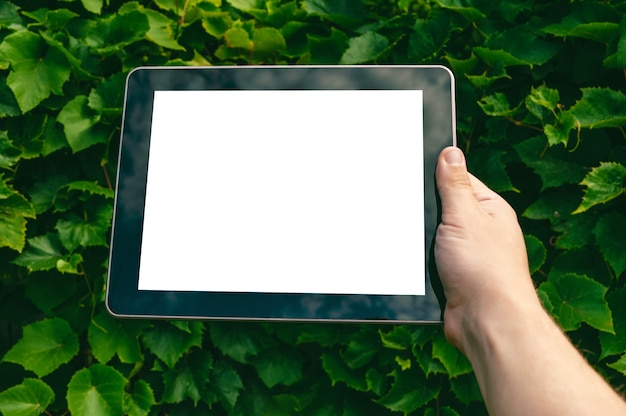 Mock up tablet in the hands of a man. against the backdrop of greenery.