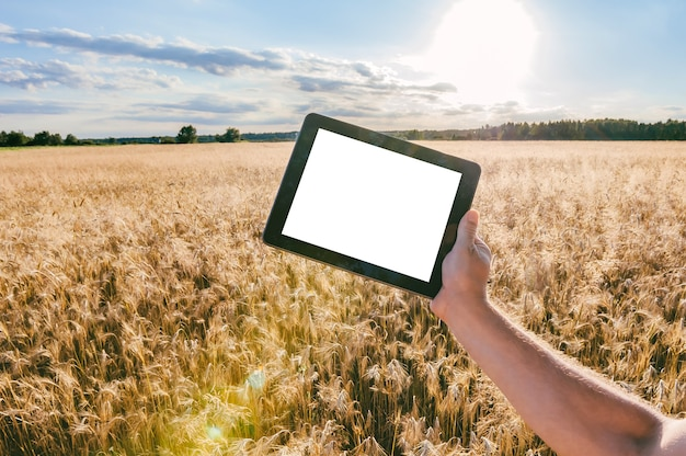 Mock up tablet in the hands of a man. against the background of a field with ears of wheat in sunny weather.